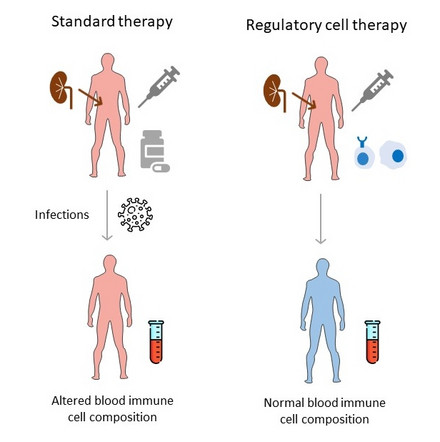 Scheme of regulatory cell therapy